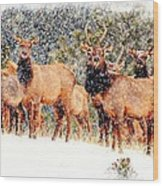 Let It Snow - Barbara Chichester Wood Print