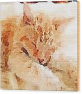 Let Sleeping Cats  Wood Print