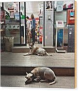 Let Sleeping Dogs Lie Where They May Wood Print