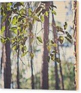 Let Your Light Shine Through Wood Print