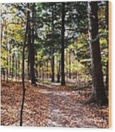 Let's Take A Walk In The Woods Wood Print