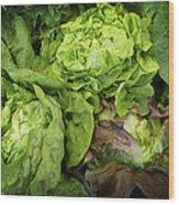 Lettuce Go Forward Wood Print