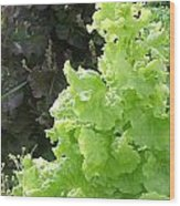 Lettuce Run Amok Wood Print