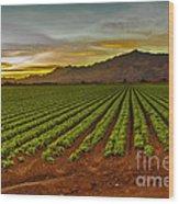 Lettuce Sunrise Wood Print