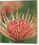 Leucospermum Pincushion Protea Flower - Tropical Sunburst - Hawaii Wood Print