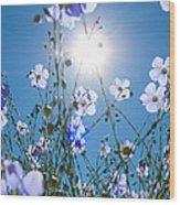 Lewis Blue Flax Backlit Wood Print