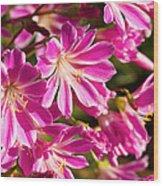 Lewisia Cotyledon Flowers Wood Print