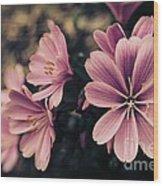 Lewisia Flowers - 7 Wood Print