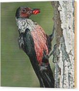 Lewiss Woodpecker With Fruit In Beak Wood Print