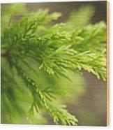 Leyland Cypress Golconda Wood Print