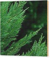 Leyland Cypress Green Wood Print