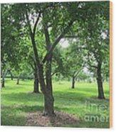 Liberty Hall - Apple Orchards Wood Print