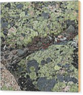 Lichen And Granite Img 6187 Wood Print