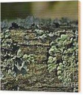 Lichen Macro I Wood Print