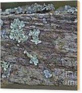 Lichen Macro II Wood Print