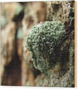 Lichen Mimic Wood Print