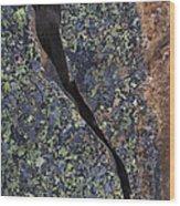 Lichen On Granite Wood Print by Heiko Koehrer-Wagner