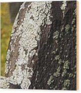 Lichen On Headstone Wood Print