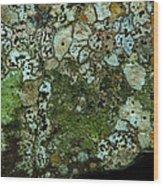 Lichen On Rock In Suck Creek Wood Print