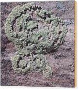 Lichen Patterns Wood Print