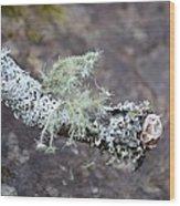 Lichens 2013 Wood Print