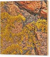 Lichens On The Shoreline Rocks 2 Wood Print