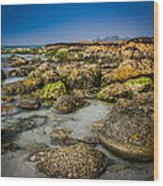 Life Clings As The Tides Ebb Wood Print