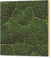 Life Grid In A Leaf Wood Print