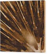 Lifecycle 1 Wood Print