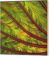 Lifepulse Wood Print