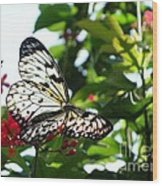 Light And Butterfly Wood Print