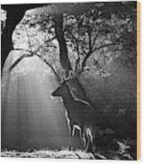 Light And Deer Wood Print