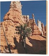 Light And Shadow In The Bryce Canyon  Wood Print