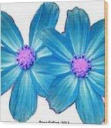 Light Blue Asters Wood Print