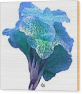 Light Blue Iris Wood Print