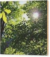 Light Dancing Wood Print