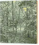 Light Forest Scene Wood Print