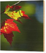 Light Gives Us All A Chance Wood Print by Aimelle