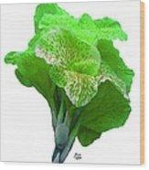 Light Green Iris Wood Print