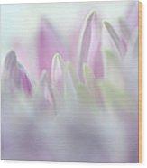 Light Impression 2. Pink Chrysanthemum  Wood Print