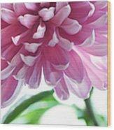 Light Impression. Pink Chrysanthemum  Wood Print