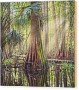Light In The Hammock Wood Print