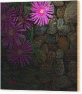 Light In The Rock Garden Wood Print