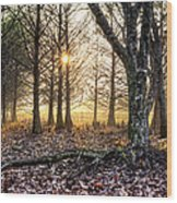 Light In The Trees Wood Print