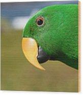 Light Of Love - Eclectus Parrot Wood Print