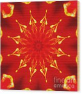 Light On A Tulip 2 Wood Print