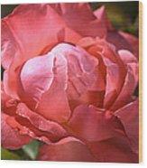 Light On Rose Wood Print