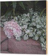 Light  Pink  Peonies Wood Print