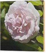 Light Pink Rose Wood Print