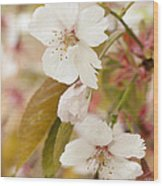 Light Pink Spring Blossom Wood Print